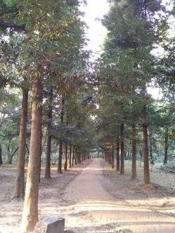 bd_gardens_path