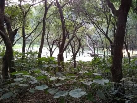 bd_gardens_trees
